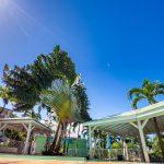 Arbre du voyageur de l'appartement Lodge Coco Deshaies (Guadeloupe)